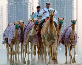 Роскошь ОАЭ по выгодной цене! Вылет из Астаны на 10-11 дней