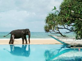 Туры на Шри- Ланку со скидками на февраль!