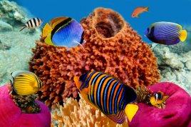 Пляжный отдых на Красном море из Астаны!